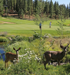 Golf Course Easement