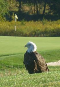 Golf Course Easement2